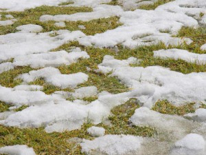 Snow Melting on grass